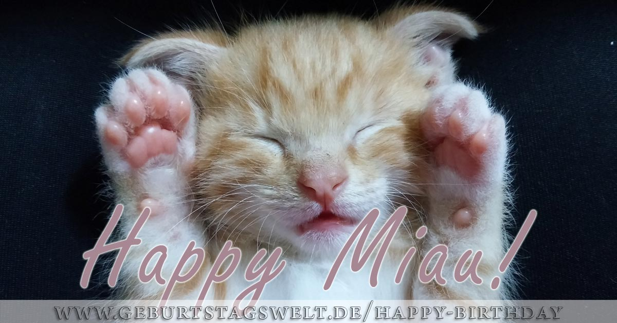 Happy Miau! Katze Happy Birthday Bild